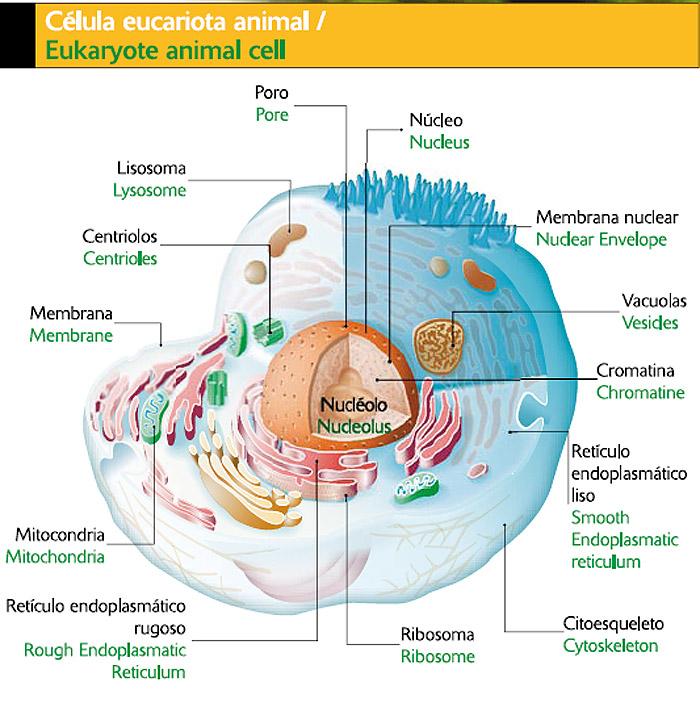 Atervux Celula Vegetal Y Sus Partes